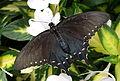 Butterfly show - Krohn Conservatory - DSC03641.JPG