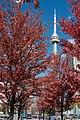 CN Tower Autumn in Toronto.jpg