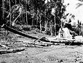 COLLECTIE TROPENMUSEUM Met een slede van kokosboomstammen wordt een grafsteen gesleept West-Sumba TMnr 10003259.jpg