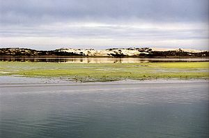 Coorong, South Australia - View across the Coorong lagoon towards sandhills on Younghusband Peninsula