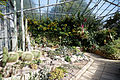 Cactus succulent house Capel Manor Gardens Enfield London England 2.jpg