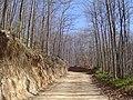 Camí a Sant Marçal del Montseny (març 2007) - panoramio.jpg