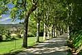 Camí al Castell de Montesquiu - panoramio.jpg