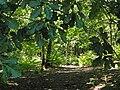 Carrefour de la route du Faîte et des Fossés d'Allu (Forêt de Montmorency) - panoramio.jpg