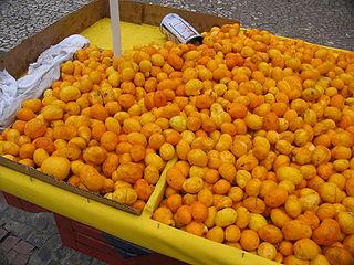 Fruta Pequi