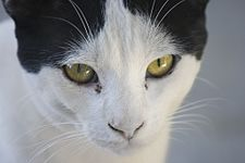 Cat eyes rheum 001.jpg