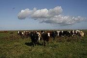 Cattle Banks marsh