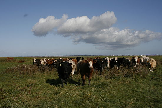 Cattle Banks marsh.JPG