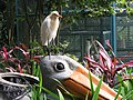 Cattle egret on trash can (7856591092).jpg