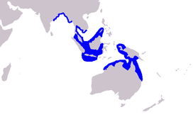 Cetacea range map Irrawaddy Dolphin.PNG