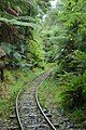 Charleston Nile River Rainforest Train tracks.jpg