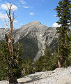 Charleston Peak from North Loop 1.jpg