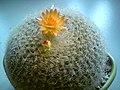 Chau cay xuong rong DSC01552.jpg