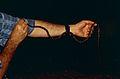 Checkerbelly Snake (Siphlophis cervinus) (10673881843).jpg