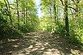 Chemin de Lunezy à Ballainvilliers entre les communes de Villejust et Saulx-les-Chartreux le 4 mai 2016 - 13.jpg