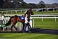 Chepstow Racecourse - geograph.org.uk - 1286222.jpg