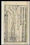 Chinese Materia medica, C17; Plant drugs, Caulis Dendrobium Wellcome L0039337.jpg