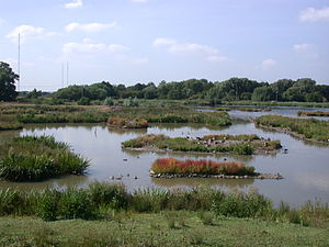 Worcestershire Wildlife Trust - Christopher Cadbury Wetland Reserve at Upton Warren