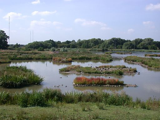 Christopher Cadbury Wetland - Upton Warren - Andy Mabbett