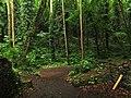Churston Woods from the Lower Limekiln.jpg