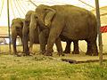 Cirkus Togni.jpg