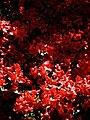 City of London Cemetery flowering shrub 7.jpg