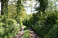 Clayhidon, track to Hole Farm - geograph.org.uk - 174122.jpg