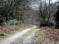 Claypit Road, Ampfield Wood - geograph.org.uk - 145125.jpg