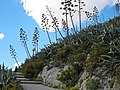 Climbing Lykavittos (3358114014).jpg