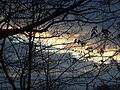 Cloudy sky around sunset with trees in December.JPG