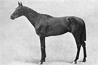 Common (horse) British-bred Thoroughbred racehorse