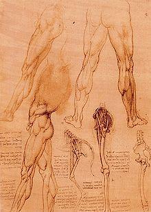 Anatomie – Wikisource