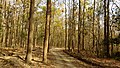 Corbett National Park, India 4.jpg