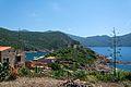 Corsica Fortin de Girolata agave.jpg