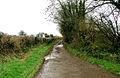Country Lane between Twmpath and Penllyn - geograph.org.uk - 286709.jpg