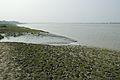 Creek - Riverbank Ichamati - Sundarban Biodiversity and Interpretation Area - Taki - North 24 Parganas 2015-01-13 4676.JPG