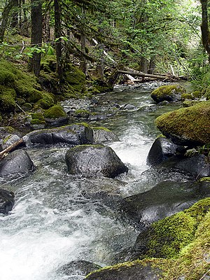 Bull of the Woods Wilderness - Image: Creek in Bull of The Woods Wilderness Area Oregon