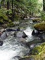 Creek in Bull of The Woods Wilderness Area - Oregon.JPG