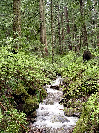 Larch Mountain (Multnomah County, Oregon) - Image: Creek on Larch Mountain Oregon