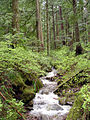 Creek on Larch Mountain-Oregon.jpg