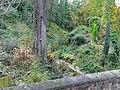 Crock Dumble - geograph.org.uk - 1167464.jpg