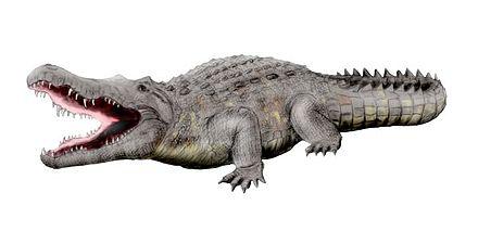 Crocodylus anthropophagus