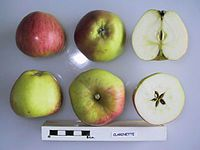 Cross section of Clarinette, National Fruit Collection (acc. 1950-043).jpg