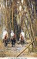 Cuba - Under the bamboo.jpg