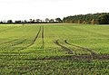 Cultivated field west of Swainsthorpe Road - geograph.org.uk - 1583912.jpg