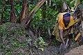 Cultivatrice camerounaise2.jpg