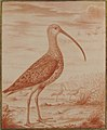 Curlews and Ducks MET 1984.390.jpg