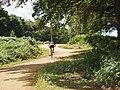 Cyclist in Richmond Park - geograph.org.uk - 909993.jpg