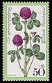 DBP 1977 951 Wohlfahrt Wiesenblumen Roter Klee.jpg