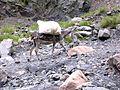 Dagri Forest Trek KPK Pakistan1.JPG